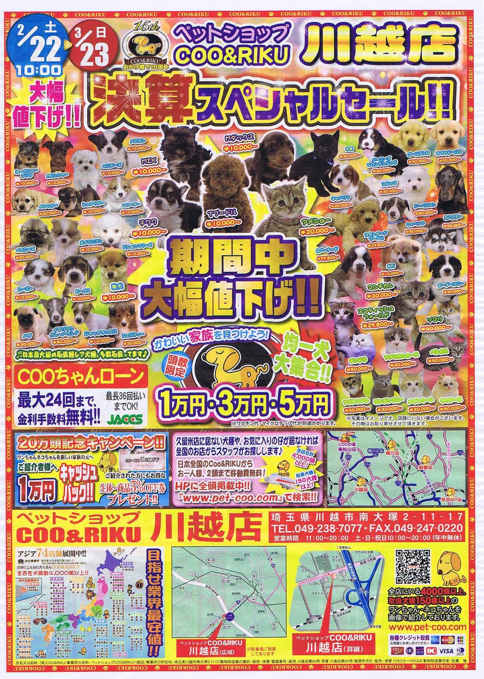 店舗 クーアンドリク Coo&RIKU(クーアンドリク) 感想。猫を購入する際に注意すること!
